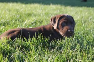 Rouxfus and Eden puppy